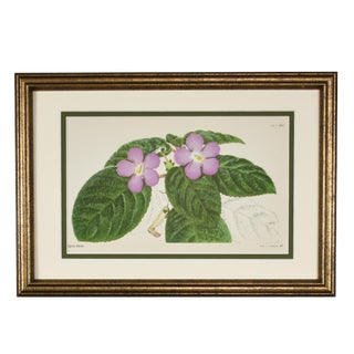 1950s Vintage English Purple Botanical Print, Framed For Sale