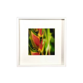 Framed Shadow Box Tropical Flower Photography For Sale