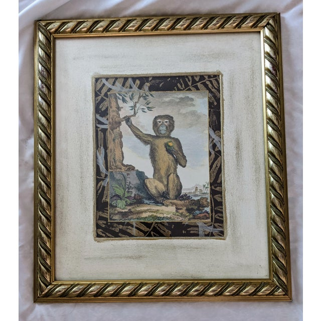 1980s Late 20th Century Hand-Colored Engravings of Monkeys After G. Buffon, Framed - Set of 4 For Sale - Image 5 of 13