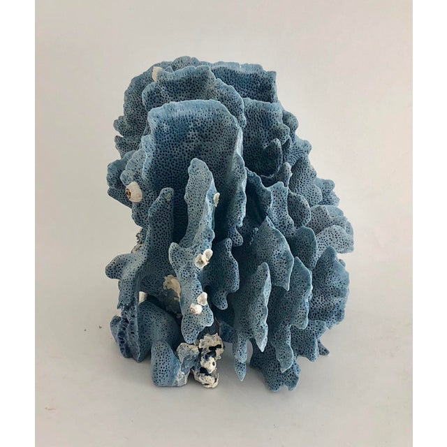 1980s Natural Blue Coral Fragment For Sale - Image 5 of 7