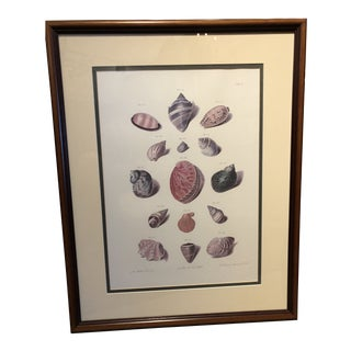 Vintage 1980s Shell Print For Sale