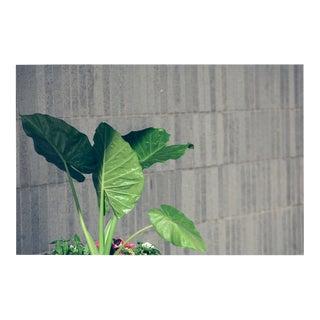 "Archival Pigment Photo Print ""Wallflowers"" by Ben Burke"