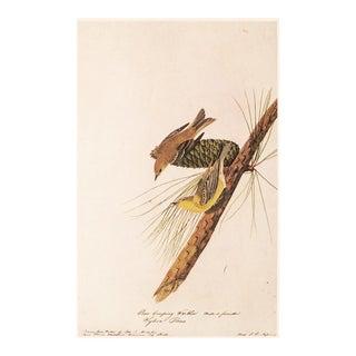 Pine Creeping Warbler by John J. Audubon, Vintage Cottage Print For Sale