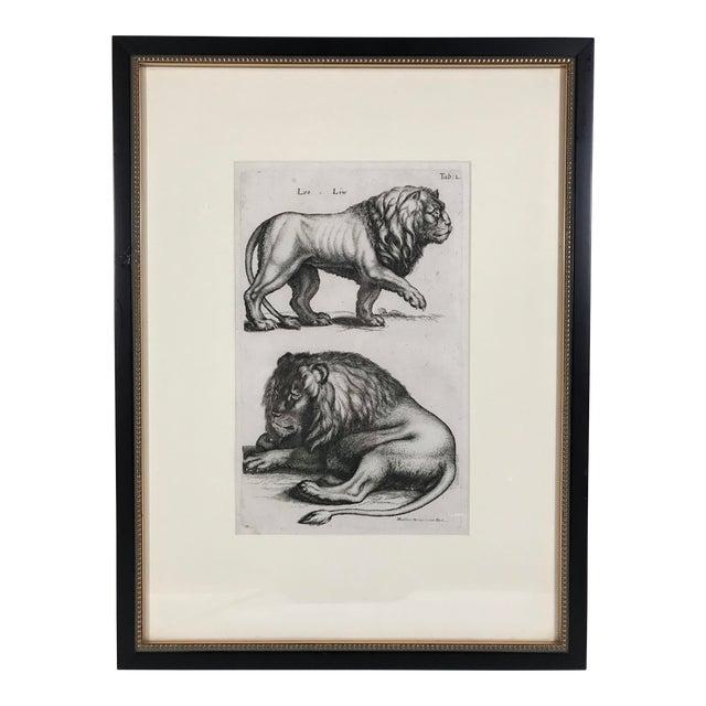 Matthäus Merian Lion Etching Print - Image 1 of 4