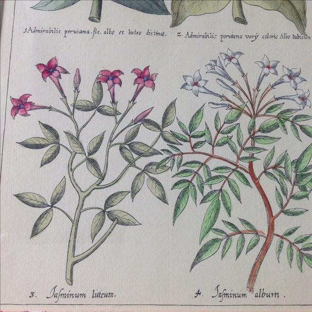 Vintage John Richard Botanical Print - Image 4 of 11