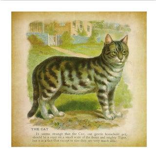 Vintage Cat Archival Print For Sale