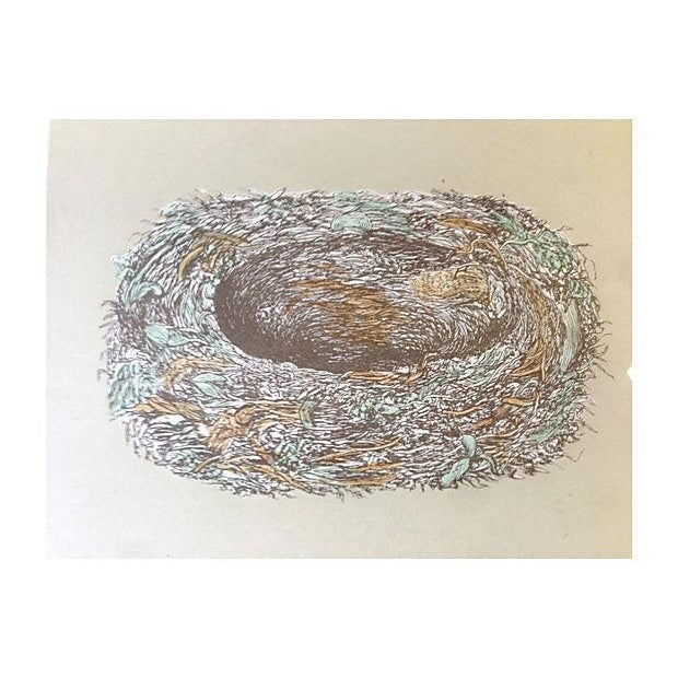1875 Spotted Fly Catcher Egg Nest Engraving - Image 3 of 5