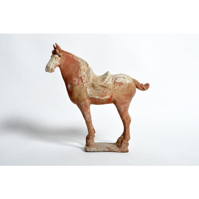 Tang Dynasty Horse For Sale - Image 13 of 13