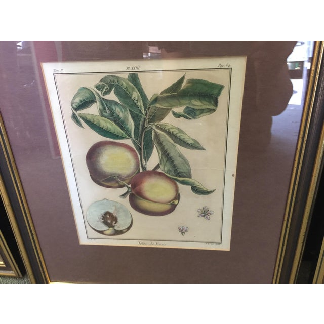 English Traditional Antique Botanical Prints - Set of 3 For Sale - Image 3 of 9