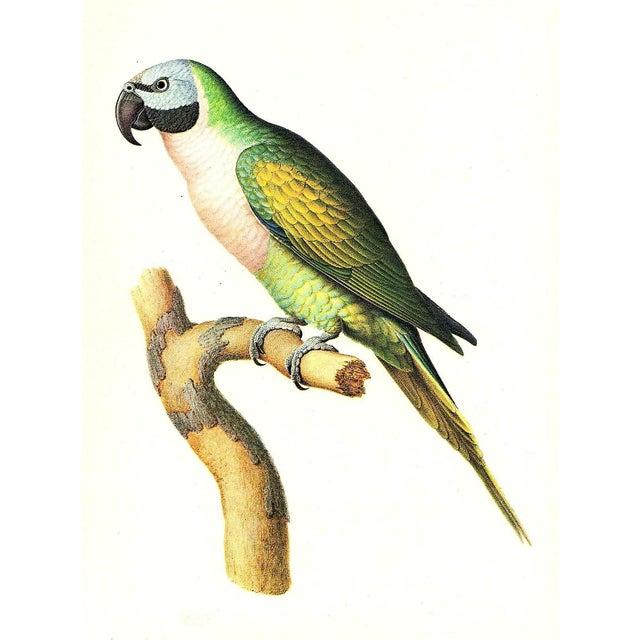 """Boho Chic Vintage Larousse Perroquet """"Moustache Parakeet"""" Color Lithograph For Sale - Image 3 of 3"""