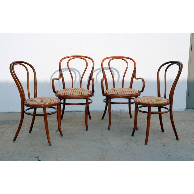Brown Set of Four Large Slender Bentwood Dining Set by Thonet For Sale - Image 8 of 9