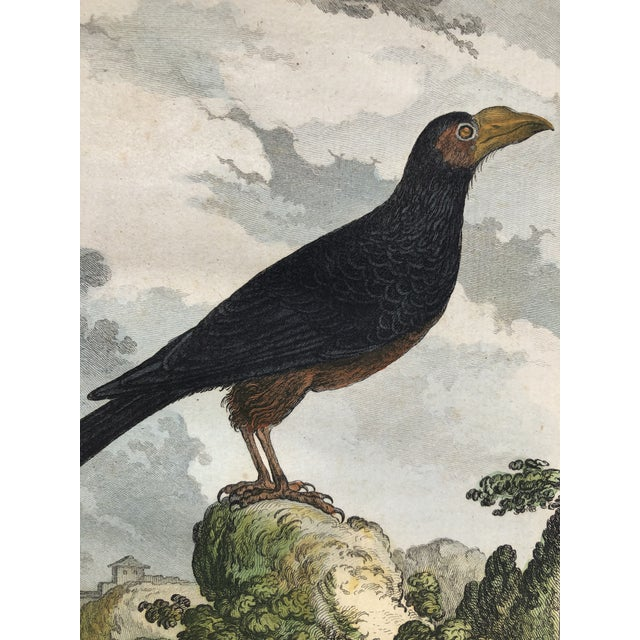 18th Century French Bird Engraving Signed by Jacques De Sève Featuring an Anis For Sale - Image 12 of 13