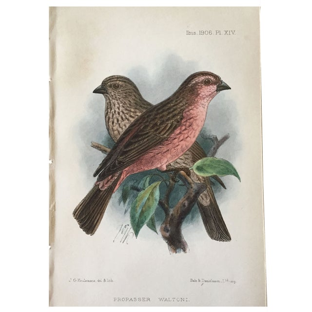 Country Antique Ornithological Prints - A Pair For Sale - Image 3 of 4