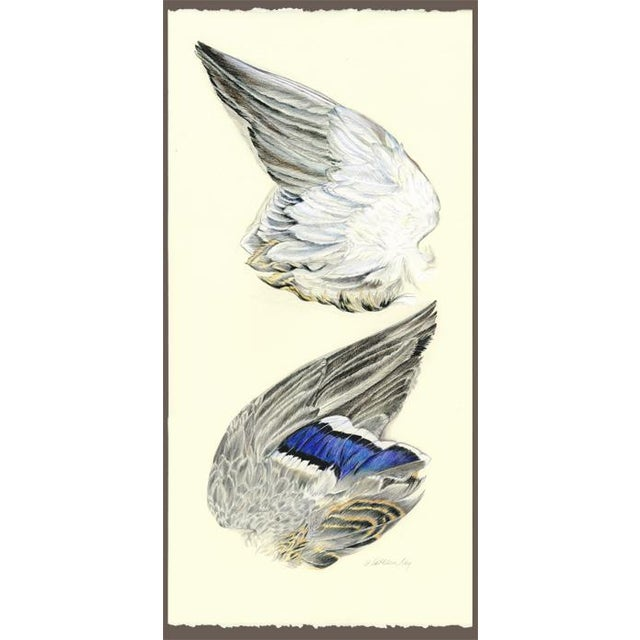 Wing of a Mallard Original Drawing For Sale - Image 4 of 4