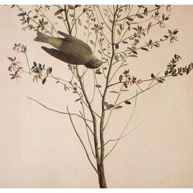 1960s 1966 Cottage Print of Orange-Crowned Warbler by Audubon For Sale - Image 5 of 8