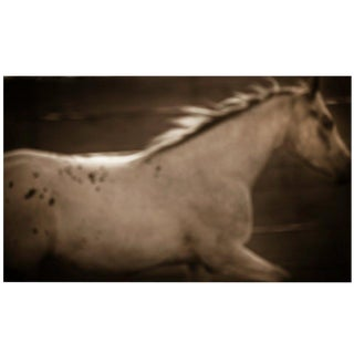 "21st Century Giclee Print Photograph ""Appaloosa"" by Janet Mesic Mackie For Sale"