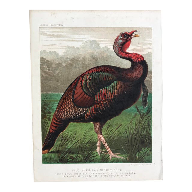 Late 19th Century Antique Cassell's Poultry Book Wild American Turkey Cock Print For Sale