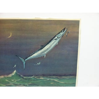 """1960s Vintage """"King Fish"""" W. Goadby Lawrence Color Print Preview"""