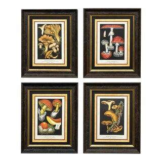 French Set Four Mushroom Chromolithographs For Sale