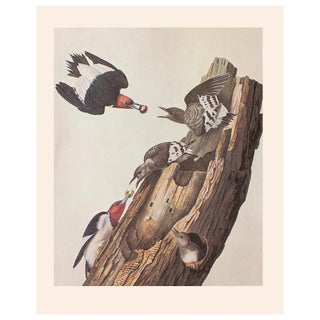 1966 Red-Headed Woodpecker by John James Audubon Vintage Cottage Print For Sale