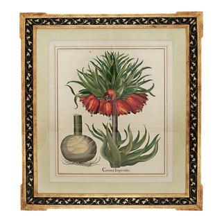 "Basil Besler ""Corona Imperialis"" Botanical Print For Sale"