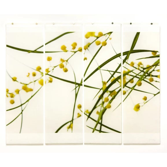 """Contemporary Jeri Eisenberg """"Acacia No.3"""" Botanical Nature Painting on Paper For Sale - Image 3 of 3"""