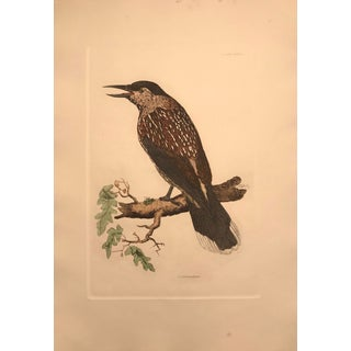 Traditional Nutcracker - Hand Colored Copper Engraving by P. John Selby For Sale