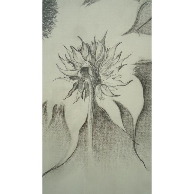 Julie Schaefer Sunflower Study Drawing For Sale - Image 5 of 5