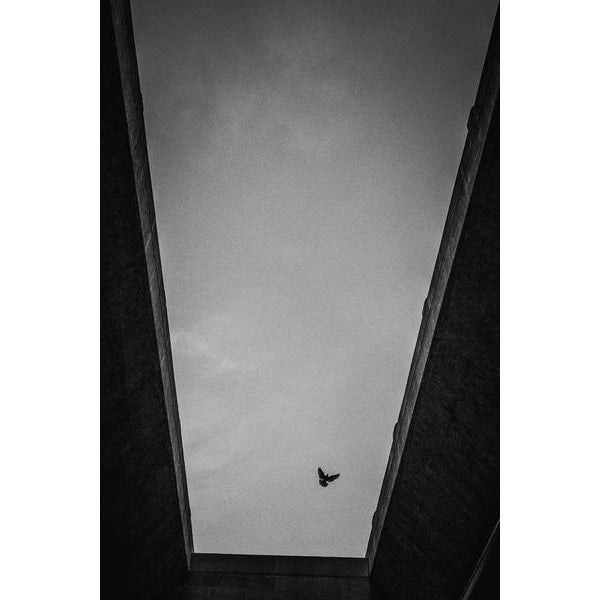 In the hustle and bustle of a large urban city like Los Angeles, you find beauty in the lone bird flying overhead. Lovely...