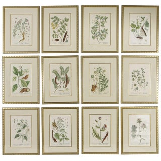 Late 18th Century Antique Elizabeth Blackwell Framed Botanical Prints - Set of 12 For Sale