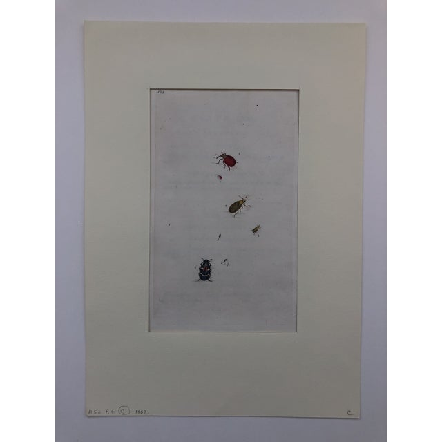 Americana 19th Century Entomology Print of Weevils For Sale - Image 3 of 4