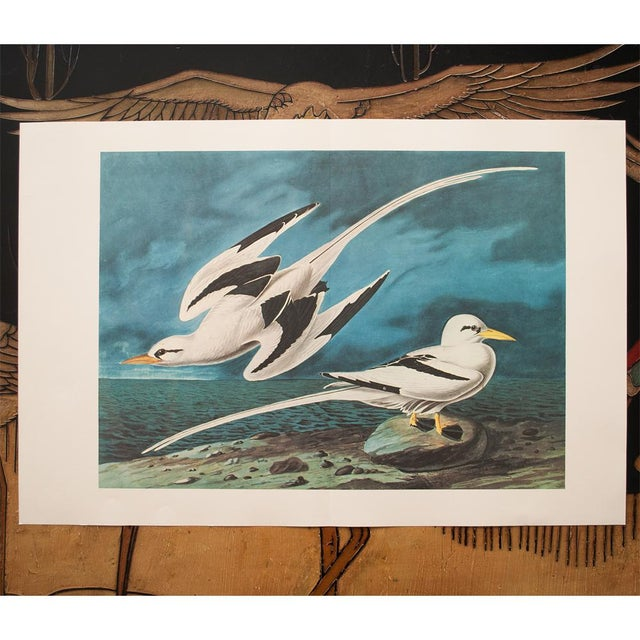 "American 1966 ""White-Tailed Tropic Bird"" Lithograph Print by Audubon For Sale - Image 3 of 7"