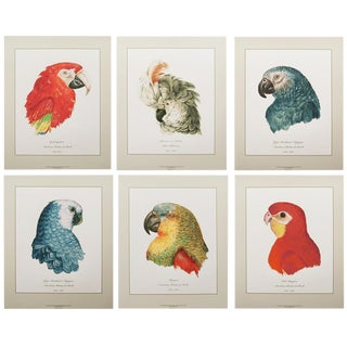 16-18th C. Parrot Head Study Large Prints - Set of 6 For Sale