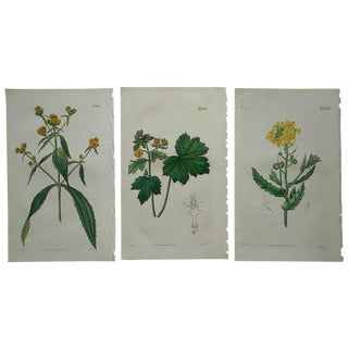 Three Antique Botanical Engravings