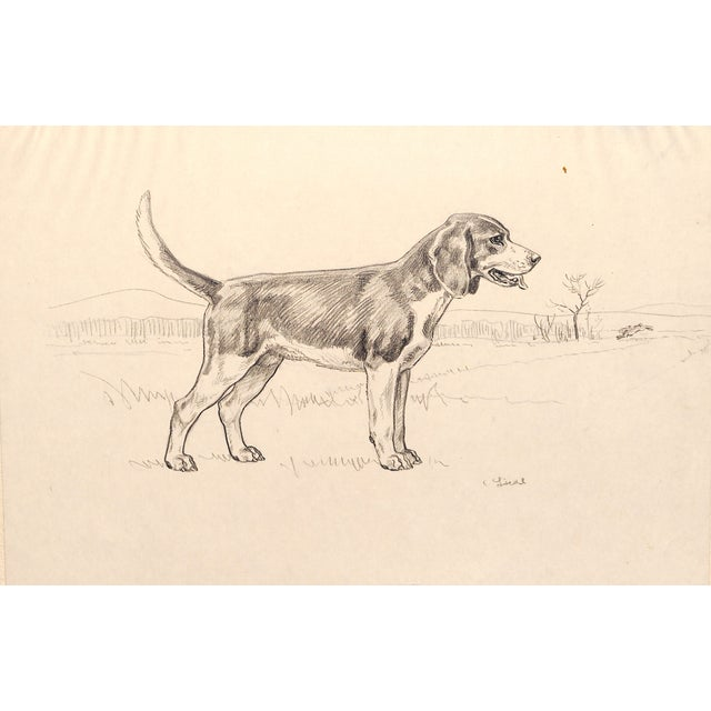 Beagle, Pencil Drawing by Charles Liedl - Image 1 of 3