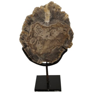 "Wood Fossil With Stand, 8"" For Sale"