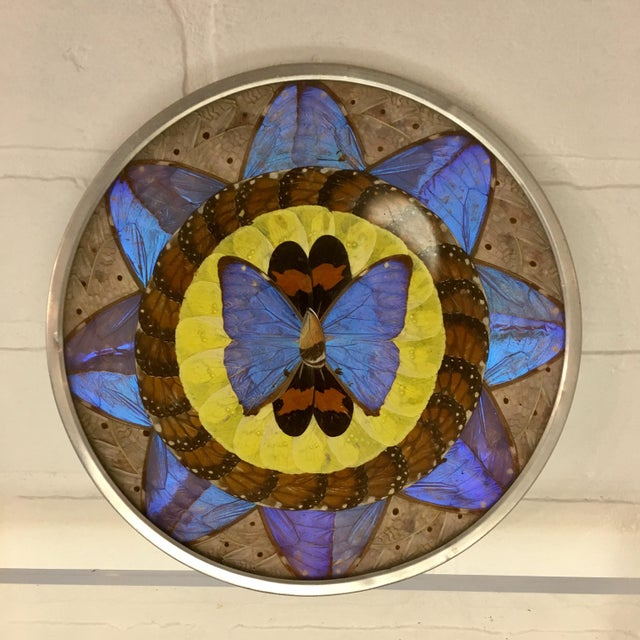 1960s Vintage Butterfly Wing Art For Sale - Image 5 of 5