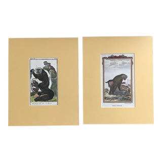 18th Century Buffon Colored French Zoological Engravings - a Pair For Sale