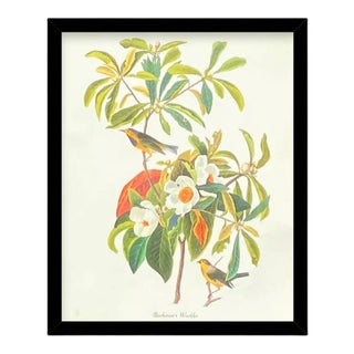 Custom Black Wood Frame of Authentic Vintage John James Audubon Bachman's Warbler Bird & Botanical Print For Sale