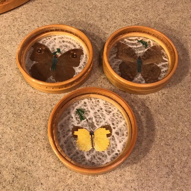 Butterfly Specimen Tray & Coaster Set - Image 5 of 11