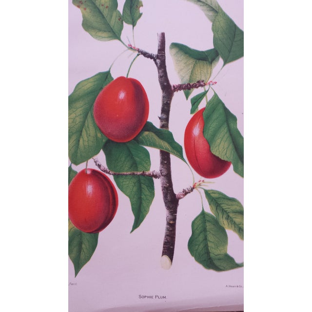 Antique 1892 Sophie Plum Lithograph - Image 3 of 3