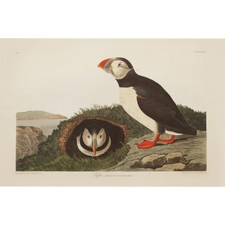 1990s Puffin by Audubon, Large Cottage or Chinoiserie Style Print For Sale