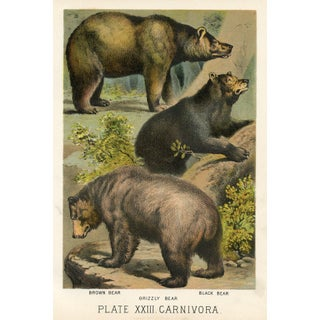 Antique Chromolithograph Bear Print For Sale