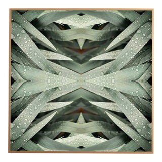 """""""No. 113"""" Contemporary Botanical Photograph by Erin Derby, Framed For Sale"""
