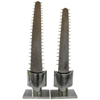 Monumental Pair of Sawfish Bills For Sale