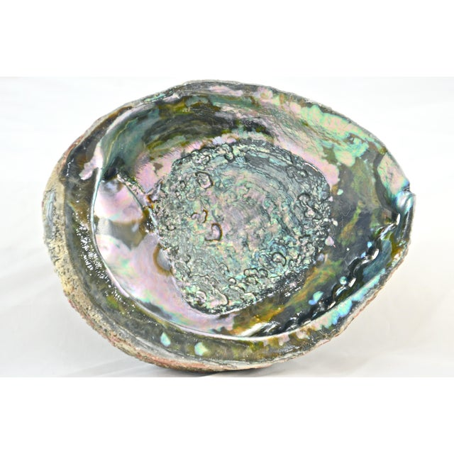 Large vintage mother-of-pearl bowl-shaped abalone ocean sea shell with a polished interior to enhance the iridescent aqua,...