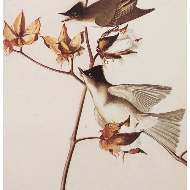 1960s 1960s Cottage Style Lithograph of an Eastern Phoebe by Audubon For Sale - Image 5 of 9