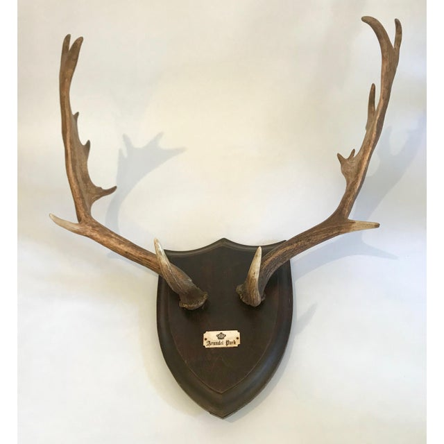 19th Century Black Forest Red Stag Antlers Mounted on Shield Shaped Plaque For Sale - Image 13 of 13
