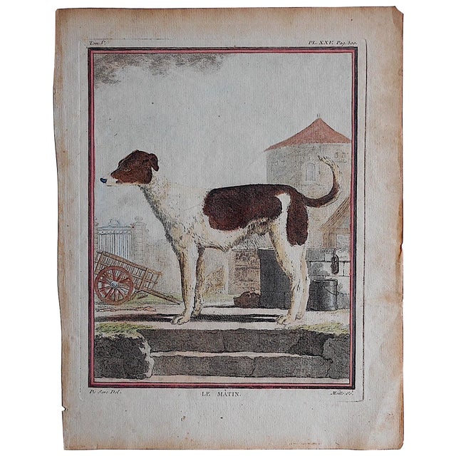 Antique Dog Engraving - Le Matin For Sale