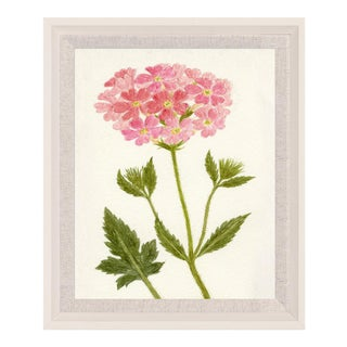 Hubbard Flower, Small: 8089 Artwork, Framed Artwork For Sale